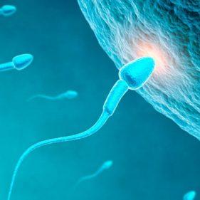 aumentar o volume do esperma