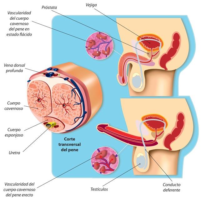 curar la próstata con niveles de testosterona