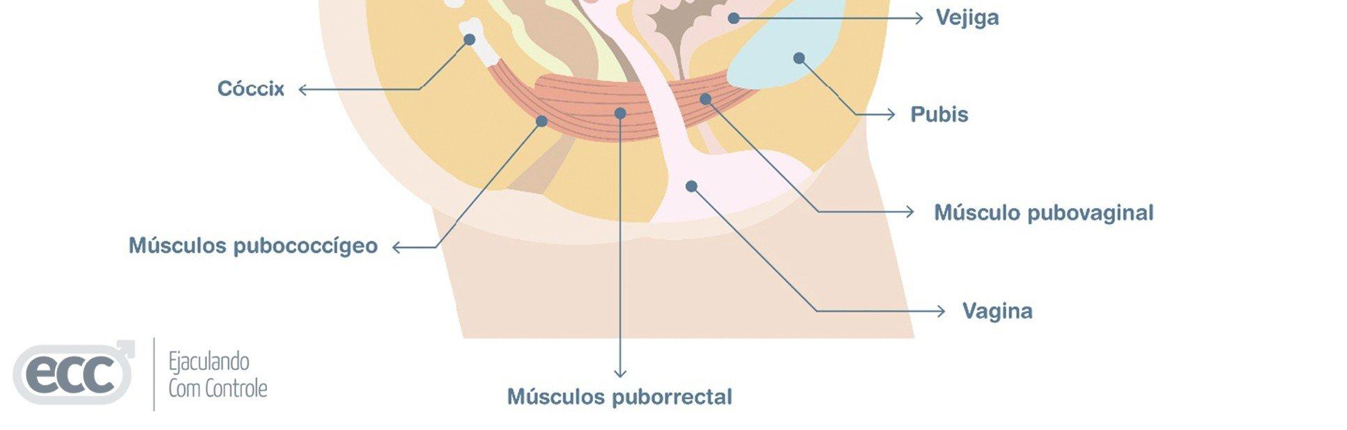 exercícios para o músculo pc